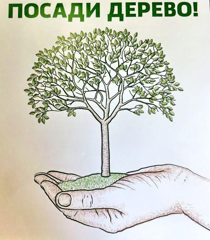 Посади дерево мне в подарок 6
